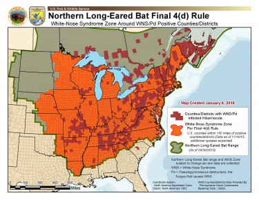 WNS buffer zone for northern long-eared bat