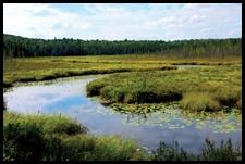 wetlands banking
